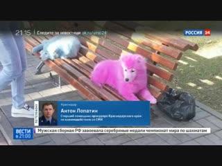Новости на «Россия 24» • Сезон • Под Геленджиком обнаружили двух розовых собак