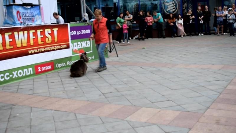 Танцы с собаками! Кинолог Наталья и спаниель Габи на благотворительном фестивале