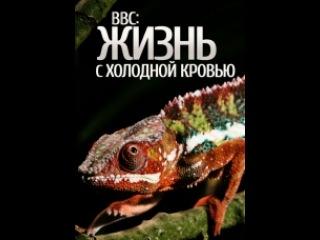 Фильм BBC: Жизнь с холодной кровью (Life in Cold Blood). Серия 4 - смотреть легально и бесплатно онлайн на MEGOGO.NET