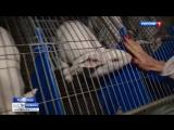 Полные брюшки_ как развивается кролиководство на Кубани ( 480 X 854 ).mp4