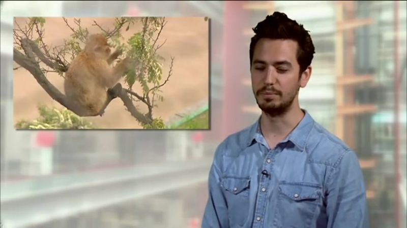 BBC Learning English Video Words in the News Floods in Europe (5th June 2013)