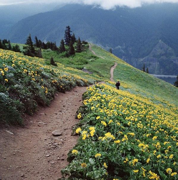 Весна на Дог Маунтин, Вашингтон, США
