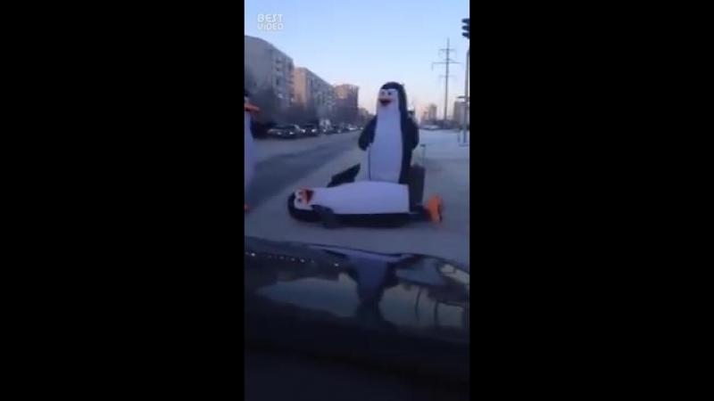 🐧Приключения пингвинов-шпионов в России🐧