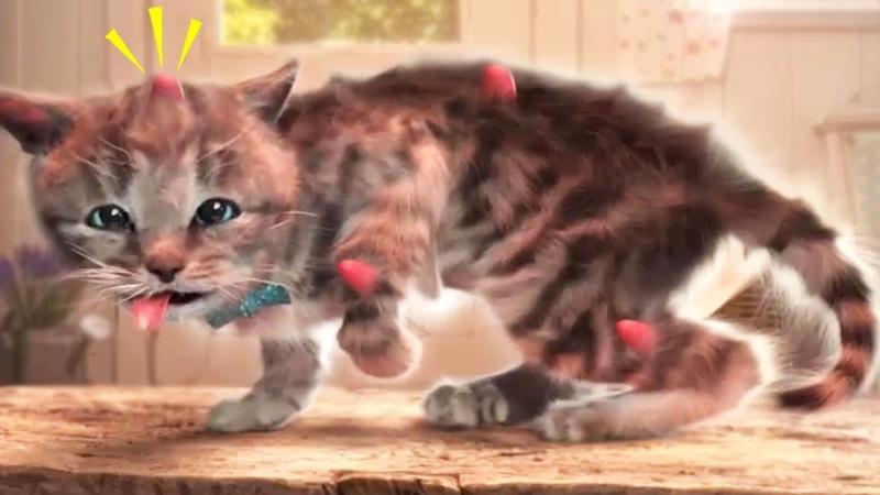 Little Kitten Adventures Pet Care | Cute Kitten Dress-Up Bathtime Kids Cartoon Colours Games