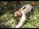 Смішні приколи про тварин Вусо-лапо-хвіст 7