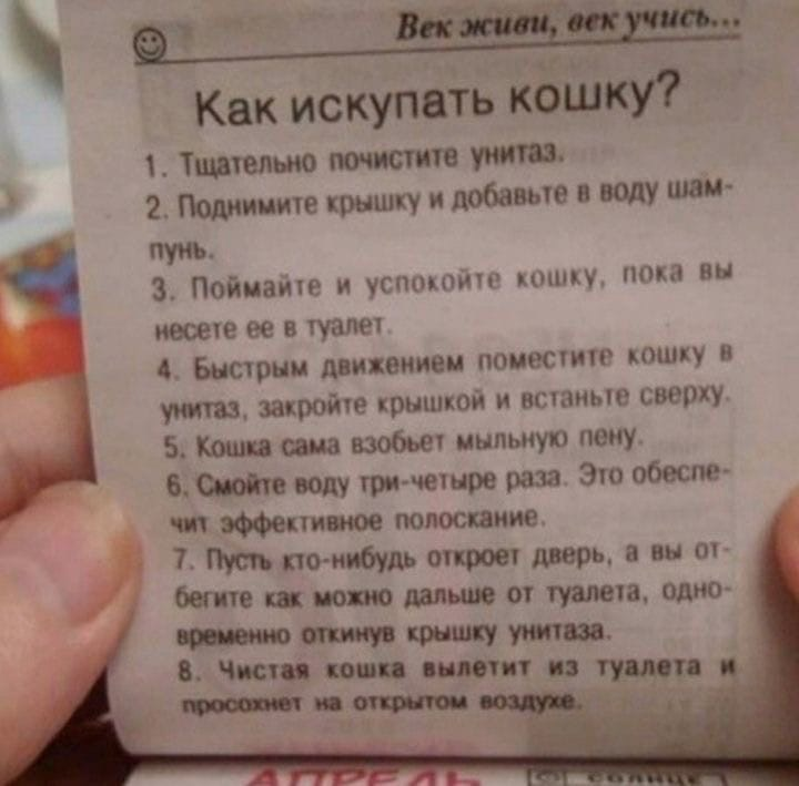 Как испугать кошку )