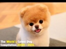 Boo Dog - The World's Cutest Dog (Video Compilation 2009 - 2013)