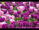 Breathtaking Colors of Nature in 4K II 🌷🌷🌷🌷🌷 Beautiful Flowers - Sleep Relax Music