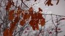 Муром, Парк 30 лет Победы - Воробьиный хор / Murom, Park 30 Years of Victory - The choir of sparrows