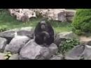 тем временем в немецком зоопарке