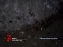 Тараканы атаковали одну из челябинских улиц