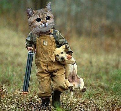 Кошачий юмор - Страница 4 2_dB5OGru9w