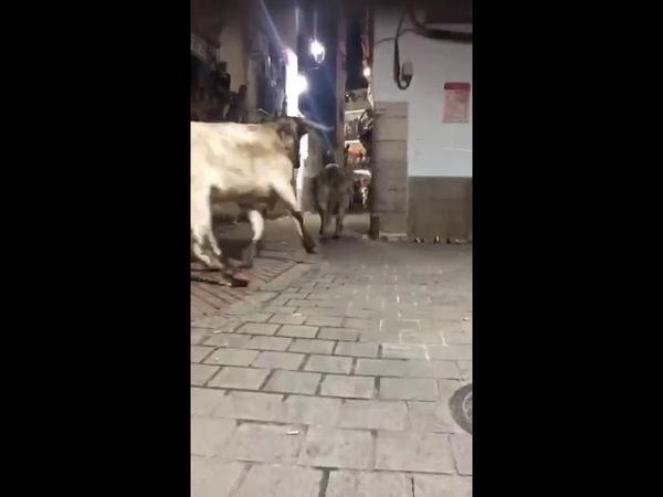 Не вписался в поворот. Гонки с быками в Испании