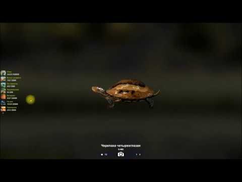 Черепаха четырехглазая ловля черепах в игре Трофейная рыбалка 2