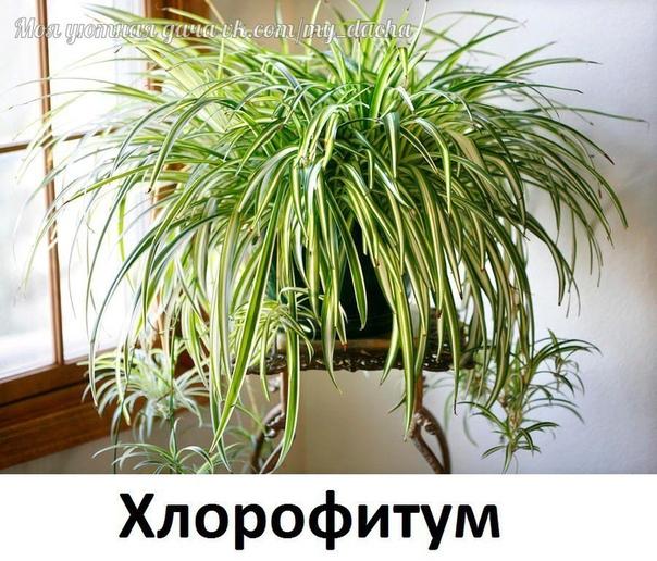 МАГИЧЕСККИЕ СВОЙСТВА ДОМАШНИХ РАСТЕНИЙ ИЛИ КАКИЕ ЦВЕТЫ ЖЕЛАТЕЛЬНО, А КАКИЕ НЕ СТОИТ ИМЕТЬ В ДОМЕ! Существует мнение, что комнатные растения таят в себе неимоверную магическую силу. Есть даже