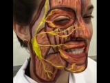 Вот так выглядит тройничный нерв и лицевые мышцы