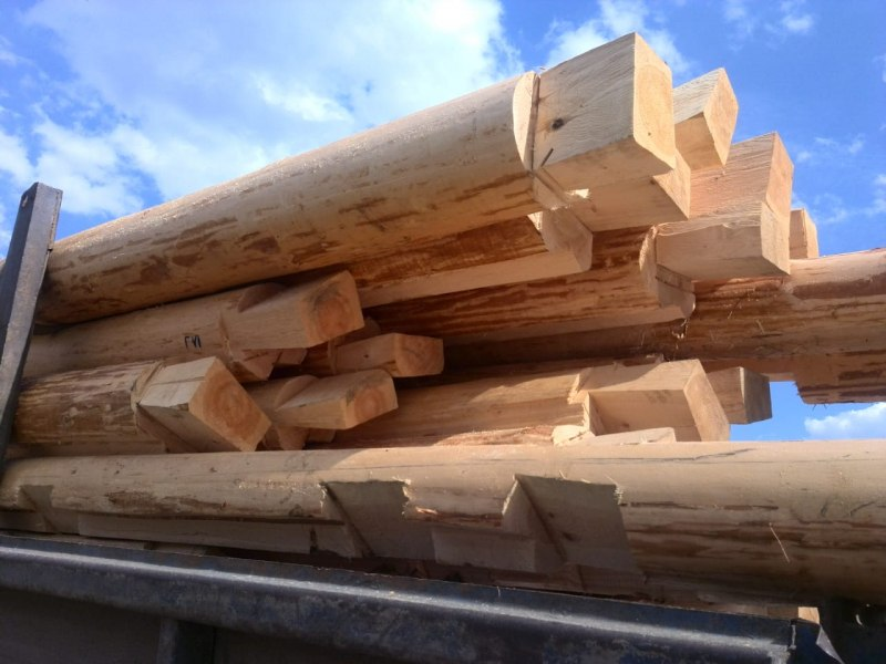 Томская полиция задержала подозреваемого в незаконной рубке леса почти на 900 тыс руб