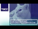 Как эрмитажный кот-оракул готовится к ЧМ