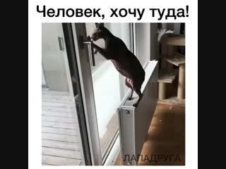 Просятся куда-то выйти или зайти, ты им дверь открываешь, а они сидят ещё и думают идти или нет?
