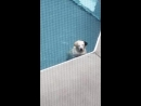 Dog enjoys a massage by the swimming pool jets