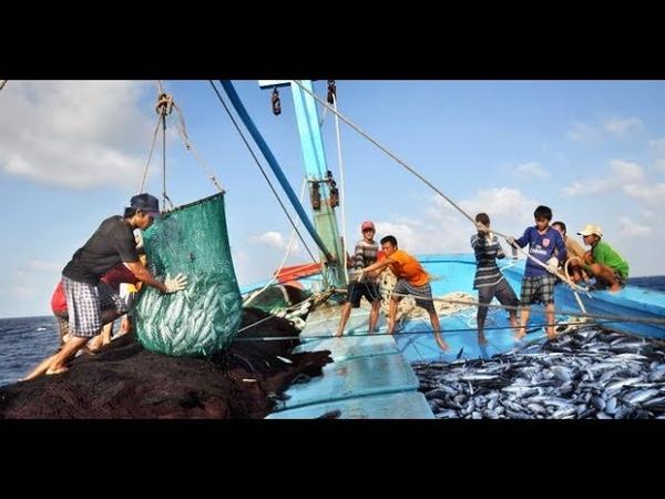 đánh bắt cá trúng đàn cá cam lớn- nhât ký đi biển 13