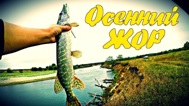 Осенний ЖОР щуки на реке Мокша | Рыбалка на спиннинг | Мордовские Будни