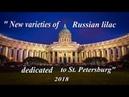 Презента́ция. Сорта Русской сирени, посвященные Санкт Петербургу 2018