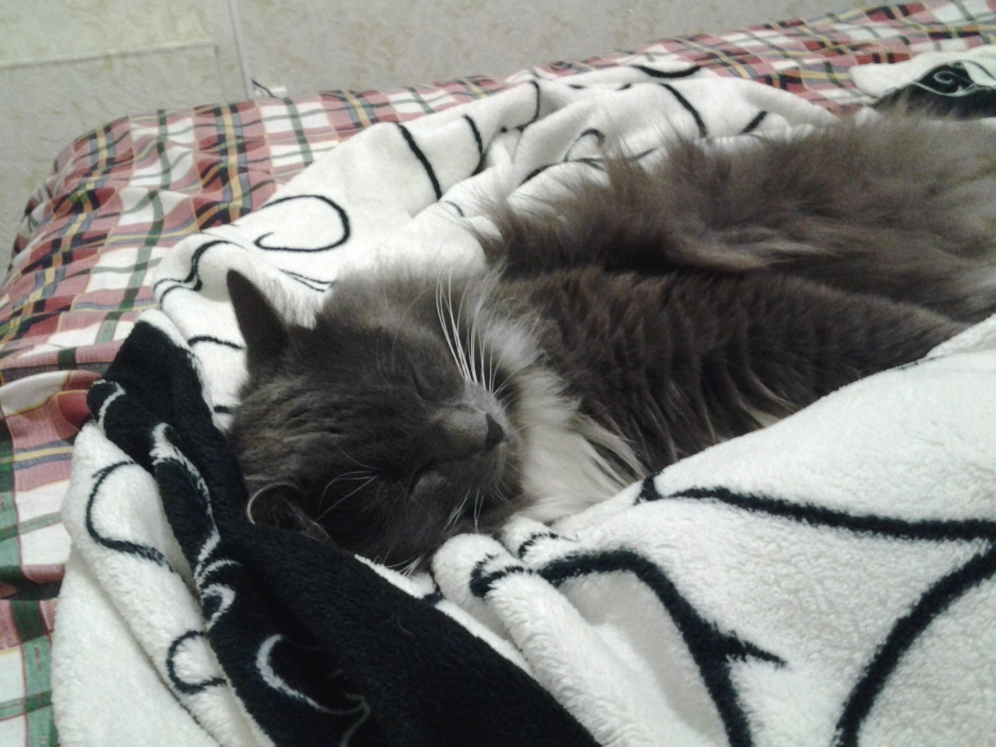 Сладосный сон ххх 7 фотография