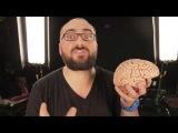 VSauce: Что ты можешь делать без мозга?