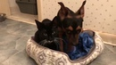 Dog and Cat Rescued Together and Won't Leave Each Other's Side