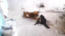 кошка привела своих котят лучшему другу...