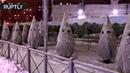 В Петербурге неизвестные «нарядили» ёлки в стиле ку-клукс-клана
