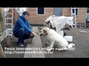 Знакомство собаки из приюта с хозяином счастливая Риша в новом доме love a stray dog from