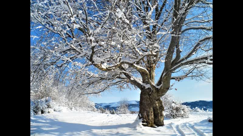 Хруст крымского горно-лесного снега