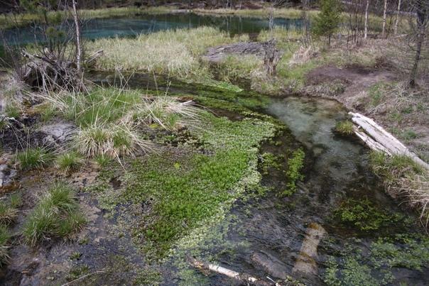 Прилегающее болото. Завораживает, правда?