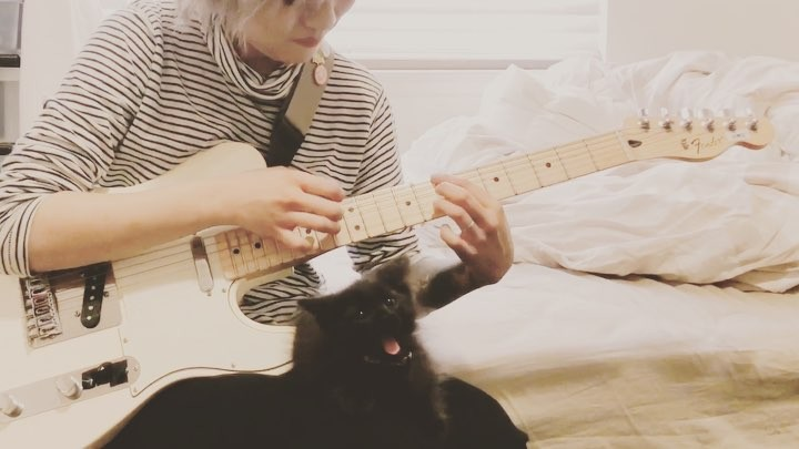 "Alicia rei 麗 on Instagram: ""Trying to practice with a kitten is rly hard practice happy caturday nya fender telecaster wow frikking annoy..."