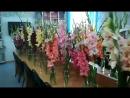 Выставка Грациозный гладиолус