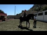 Продажа лошадей в Испании (Лорка)