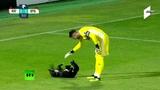 Пёс в игре в Грузии собака выбежала на поле во время футбольного матча