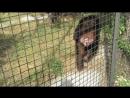 Человек произошел от обезьяны. И если это так, то я сам этому удивлюсь! Писал Чарлз Дарвин. Сафари парк Тайган июль 2018
