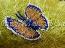 Мастер-класс бабочки из бисера.