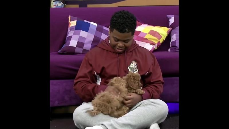 Can Benji handle the Puppy Challenge Let's see how long it takes for him to smile 😍🐶 gameshakers nationalpetday