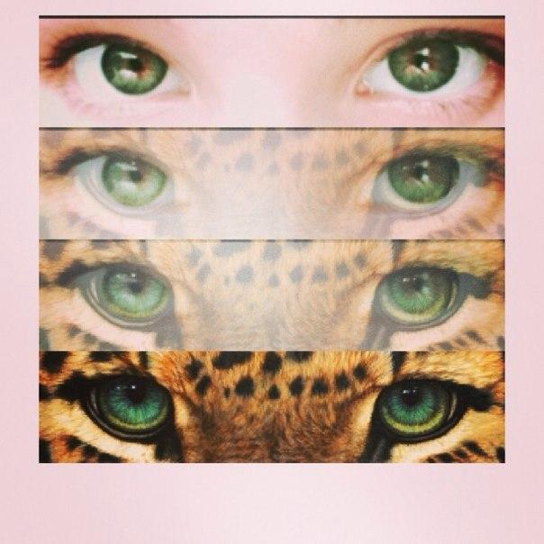 Как сделать свои глаза кошачьими 379