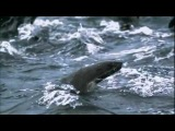 Zoo Brazil feat. Rasmus Kellerman - There Is Hope.mp4