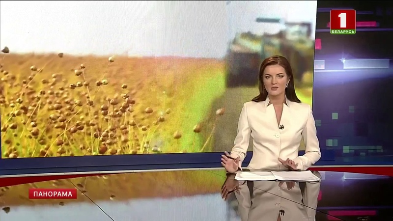 В Витебской области рекордный урожай льна. Панорама
