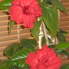 Комнатные цветы - мои фавориты