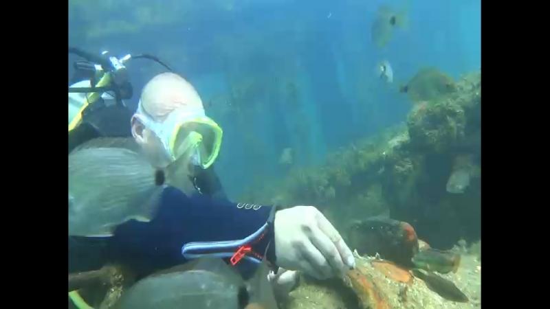 Кормим рыбок в открытом море