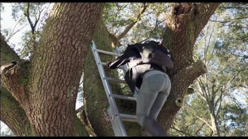 Очень голодные игры Кэнтмисс поднимается по дереву