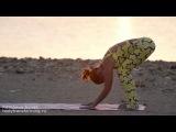 Йога. Для Начинающих- Утренний комплекс 'Нежный восход'