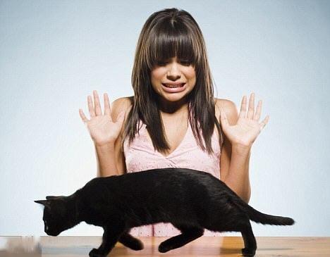 Чорний кіт переходить дорогу